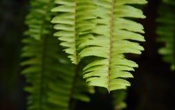 закройте вверх лист папоротника в саде Стоковые Изображения