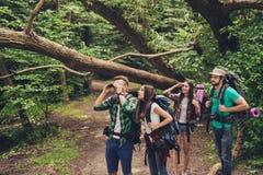 Закройте вверх 4 лучших другов, идущ в лес осени, изумленный красотой природы, нося удобные обмундирования для пешего туризма, стоковая фотография