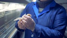 Закройте вверх малого цыпленка находясь в руках женского специалиста курятники акции видеоматериалы