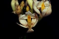 Закройте вверх малого белого цветка орхидеи стоковое изображение rf