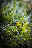 Закройте вверх малого цветка стоковое фото