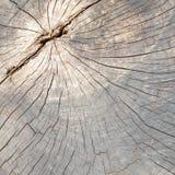 Закройте вверх мертвого ствола дерева Стоковое Изображение