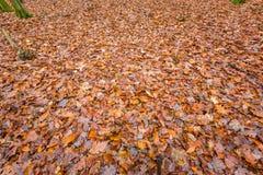 Закройте вверх мертвых листьев, естественной предпосылки Стоковая Фотография