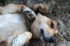 Закройте вверх милой коричневой собаки лежа на земле стоковая фотография