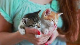 Закройте вверх 2 милых котят в руках ` s женщины видеоматериал