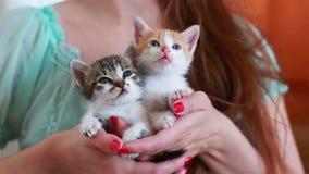 Закройте вверх 2 милых котят в руках ` s женщины акции видеоматериалы