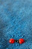 Закройте вверх милых красочных ladybirds на голубой целовать предпосылки Стоковое Фото