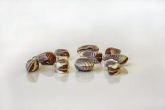 Закройте вверх морепродуктов конфеты шоколада Белизна и chocola шоколада Стоковое фото RF