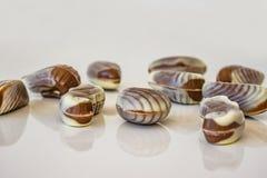 Закройте вверх морепродуктов конфеты шоколада Белизна и chocola шоколада Стоковые Изображения