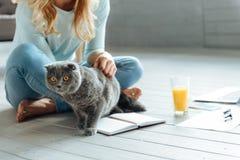 Закройте вверх молодой женщины petting кот Стоковое фото RF