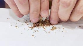 Закройте вверх мужских рук Человек подготавливая сигарету марихуаны завальцовки соединения гашиша для курения сток-видео