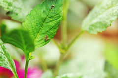 Закройте вверх мухы на зеленых лист Стоковая Фотография