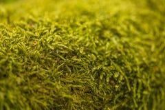 Закройте вверх мха на дереве Предпосылка жизни природы стоковые изображения rf