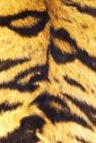 Закройте вверх нашивок тигра на реальном мехе Стоковая Фотография