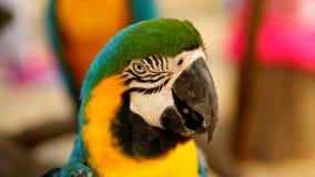 Закройте вверх на голове попугая Стоковое Фото