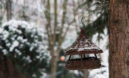 Закройте вверх на доме птицы на зиме Стоковые Фото