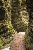 закройте вверх на деревянной тропе с мертвыми листьями в естественном каньоне 188 Стоковое фото RF