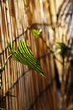 Листья альпиниста после полудня Стоковые Фото