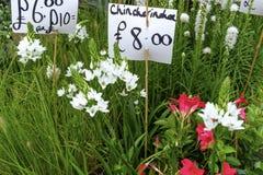 Закройте вверх на различных саженцах цветка для продажи Стоковая Фотография RF