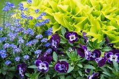 Закройте вверх на цветках смешивания в саде стоковые изображения