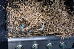 Закройте вверх огромные птицы гнездитесь построенный в гриле газа пропана Стоковое Фото