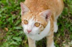 Закройте вверх оранжевого кота Стоковое Фото