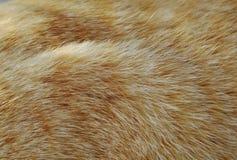 Закройте вверх оранжевых текстуры и предпосылки меха кота Стоковые Изображения RF