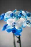 Закройте вверх орхидеи покрашенной синью Стоковые Фотографии RF