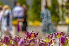 Закройте вверх ослеплять тюльпанов с людьми и построение в расплывчатой предпосылке стоковые фотографии rf