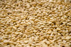 Закройте вверх отмелых кофейных зерен фокуса Стоковые Изображения RF