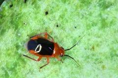 Закройте вверх очень малого насекомого стоковое фото rf