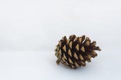 Закройте вверх одиночного pinecone на белой предпосылке Стоковые Изображения RF
