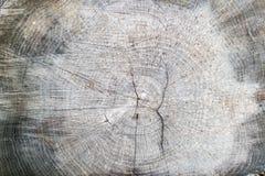 Закройте вверх пня дерева в лесе Стоковые Изображения