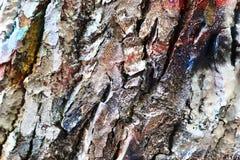 Закройте вверх поверхность красочной коры дерева распыленную с краской граффити стоковое изображение rf