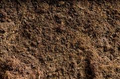 Закройте вверх почвы Стоковая Фотография