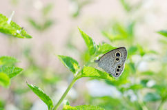 Закройте вверх по бабочке Стоковое фото RF