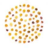 Закройте вверх по белизне цветня пчелы круглой изолированной Стоковое Изображение RF