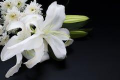 Закройте вверх по белизне lilly на темной предпосылке Стоковое Фото