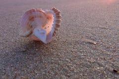 Закройте вверх по взгляду на seashell морем Стоковая Фотография