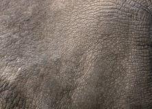 Закройте вверх по взгляду кожи носорога Стоковые Изображения