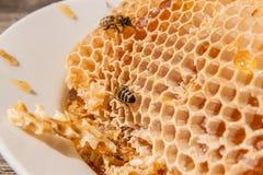 Закройте вверх по взгляду работая пчелы на соте с сладостным hon Стоковое Изображение RF