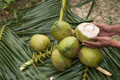 Закройте вверх по взгляду славного свежего кокоса стоковая фотография rf