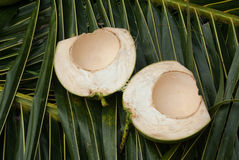 Закройте вверх по взгляду славного свежего кокоса Стоковое фото RF