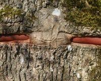 Закройте вверх по внешнему взгляду коричневой коры дерева с рему над красной ручкой металла Текстурированная грубая поверхность Стоковые Фото