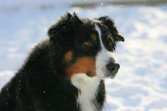 Закройте вверх по голове собаки стоковая фотография rf