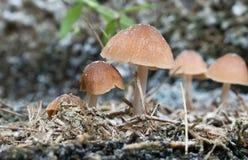 Закройте вверх по грибам Стоковая Фотография RF