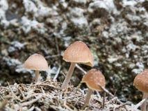 Закройте вверх по грибам Стоковые Изображения RF