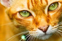 Закройте вверх по глазу кота Стоковая Фотография