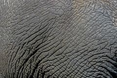 Закройте вверх по деталям одичалой предпосылки кожи слона, Стоковая Фотография RF