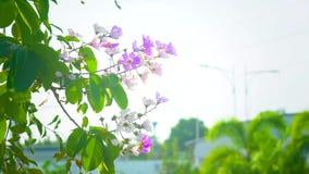 Закройте вверх по естественному цветку на дереве летом Солнцем 4K, видеоклип UHD акции видеоматериалы